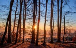 forest-sun